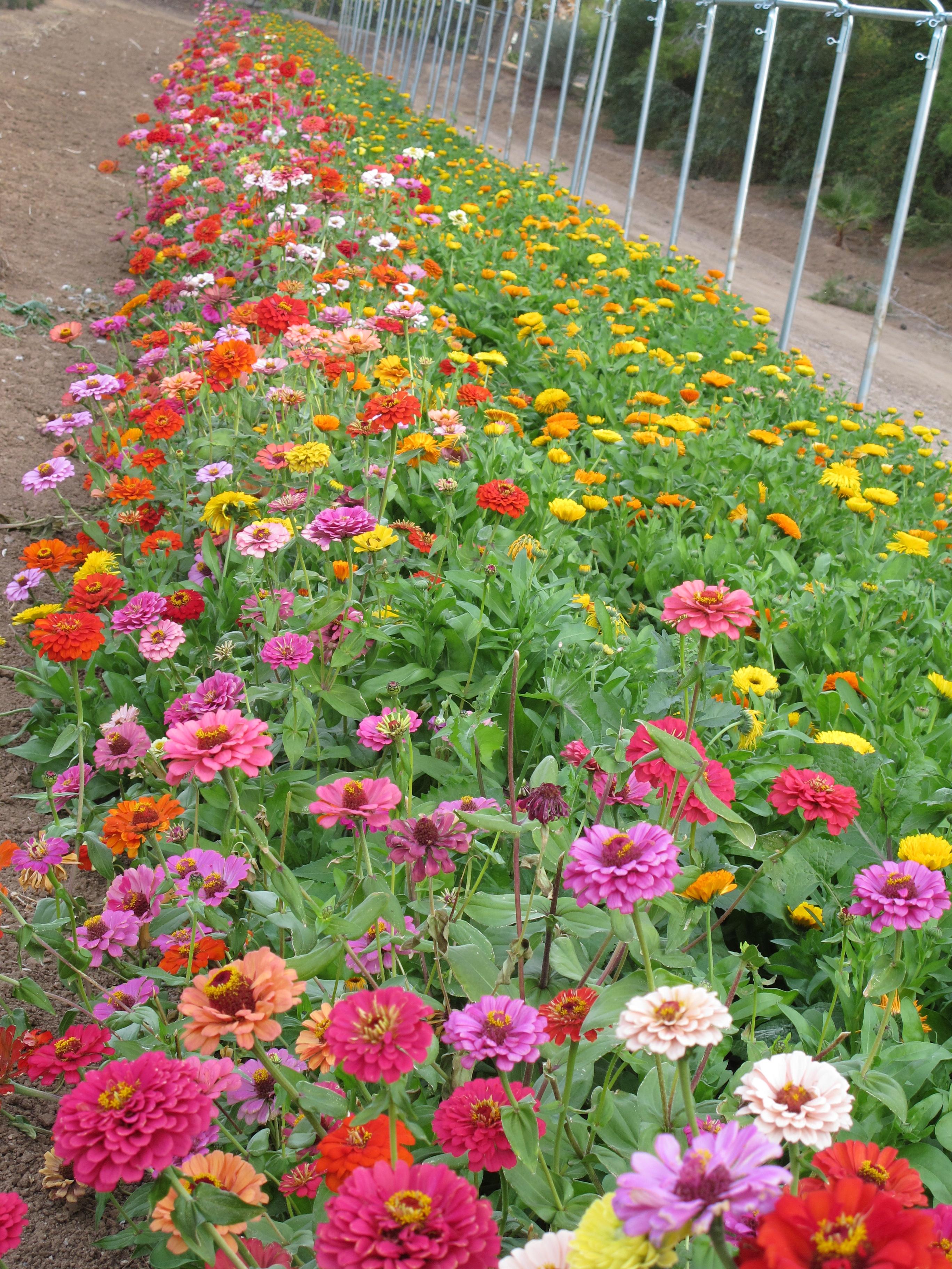 A Fall Tour The Front Garden Mcclendon 39 S Select