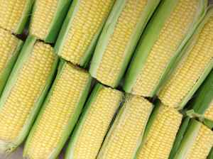 McClendon's Select Corn