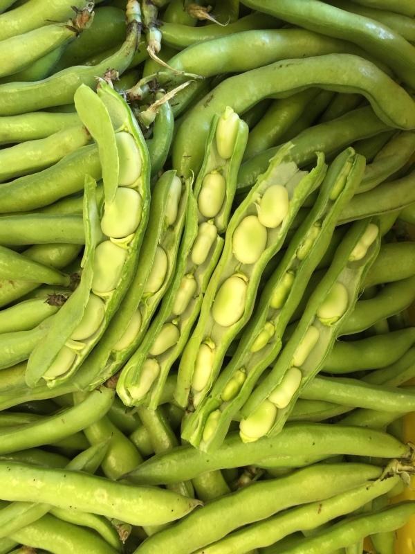 fave beans