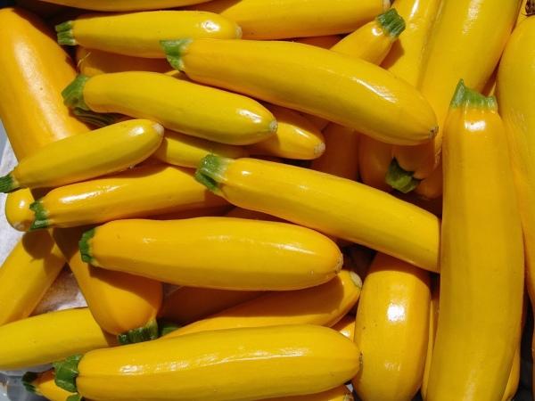 Gold Zucchini