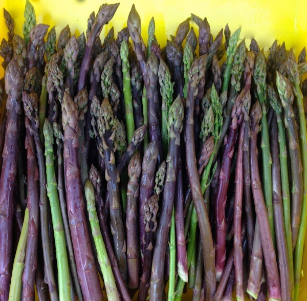 purple asparagus.jpg